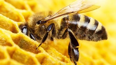 Os homens abelha e os homens parasita